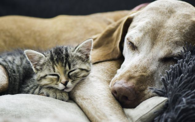 Cat and a dog sleeping